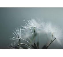 Magic Dandelion Photographic Print