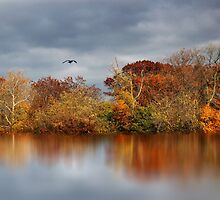 Autumn Pond Reflections  by Jessica Jenney