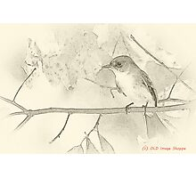 Flycatcher sumi-e Photographic Print