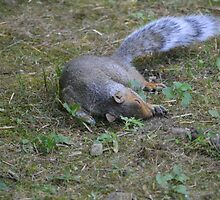 I Can't Believe I Ate All Those Peanuts by Karen Checca