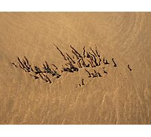 SAND RIPPLES AND SEAWEED TEXTURE Photographic Print