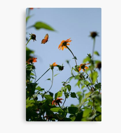 Flying Monarch Canvas Print