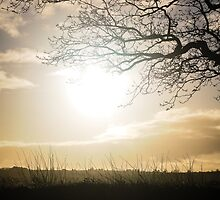 Winter sunlight through the bare branches by maddie5
