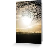 Winter sunlight through the bare branches Greeting Card