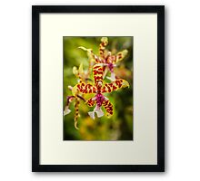 Orchid #1 Framed Print