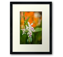 Orchid #2 Framed Print