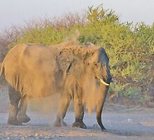 African Elephant - Dust Bath Action by LivingWild