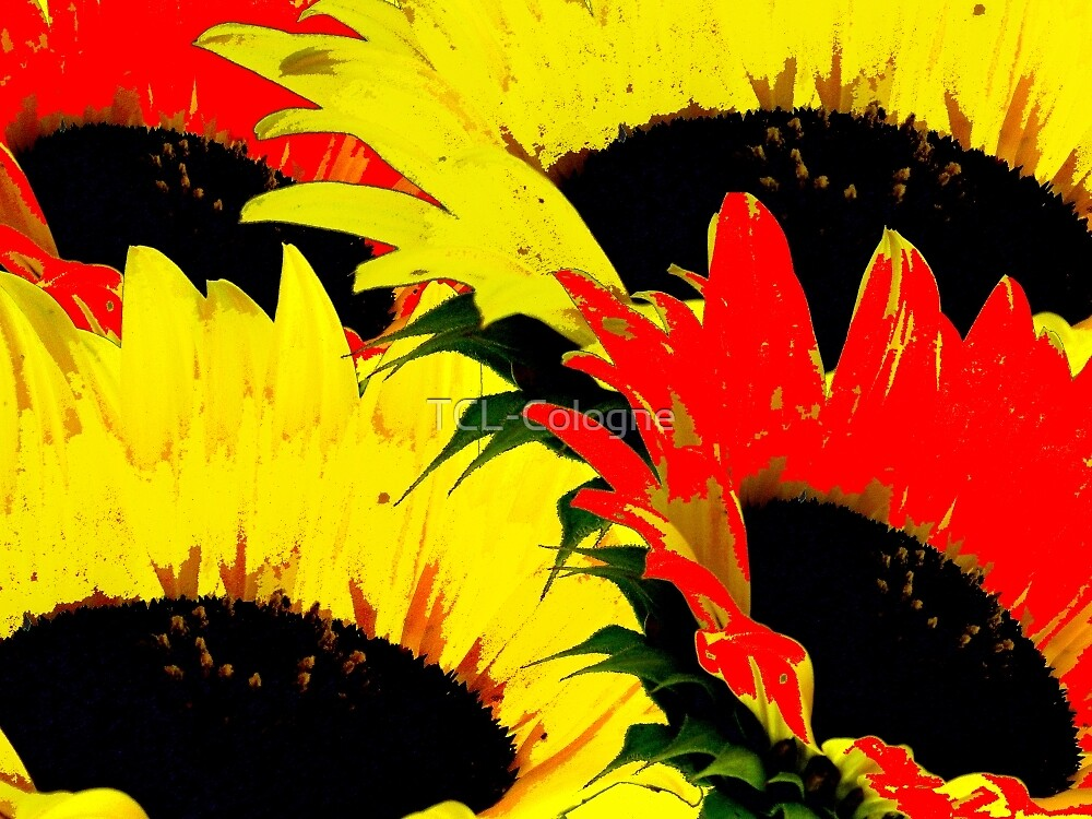 Sunny Flowers! by TCL-Cologne