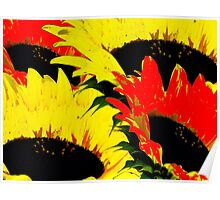 Sunny Flowers! Poster