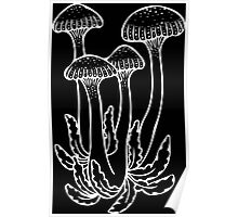 Shrooms in White Poster