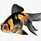 Demekin Goldfish Isolated On White by taiche