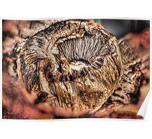 Mushroom HDR Poster