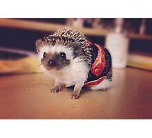 Bacon Hedgehog Photographic Print