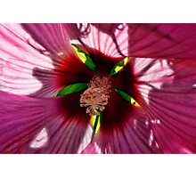 Hibiscus - Floral Symmetry Photographic Print