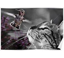 Cat & Bird - Predator and Prey Poster