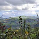 Autumn In The Sperrins by Fara