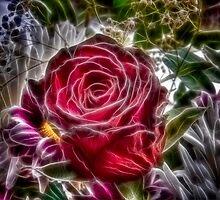 Red Rose by Nigel Butterfield