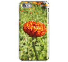 Dahlia2 iPhone Case/Skin