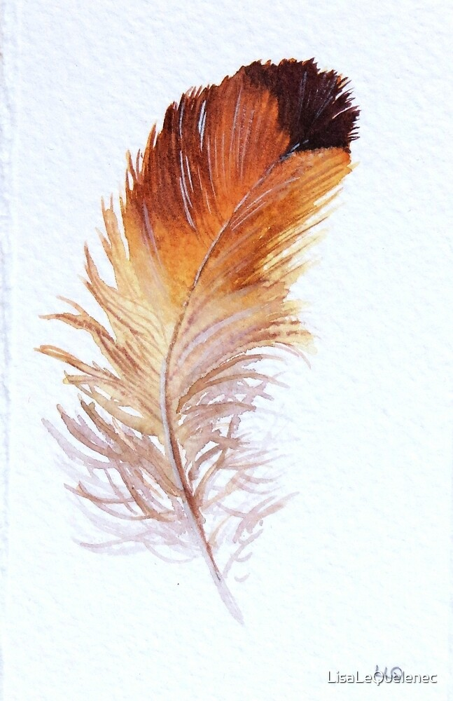 Feather Study II by LisaLeQuelenec