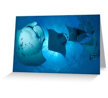 MANTA MADNESS Greeting Card