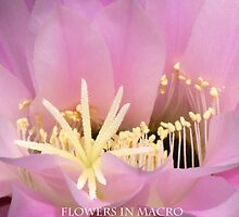Flowers in Macro by Marilyn Harris