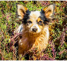 Little Puppy Photographic Print