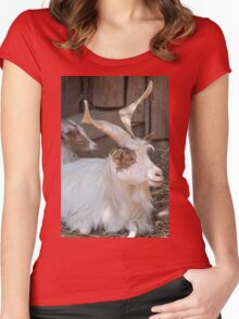 moose at the zoo Women's Fitted Scoop T-Shirt