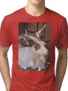 moose at the zoo Tri-blend T-Shirt