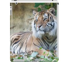 tiger at the zoo iPad Case/Skin