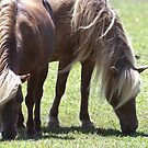 Two to Graze by nastruck