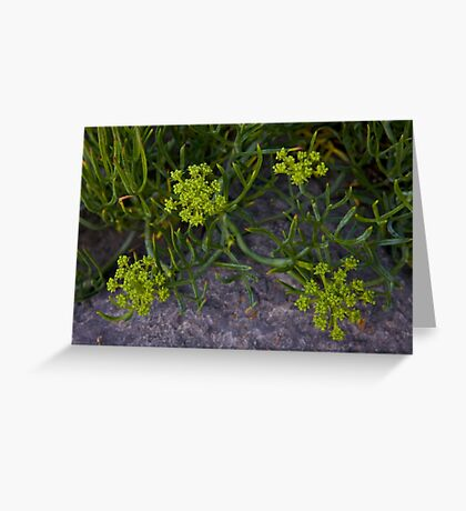 Rock Samphire, Inishmore, Aran Islands Greeting Card