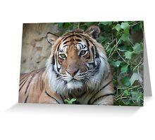 tiger at the zoo Greeting Card