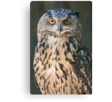 owl in the mountains Canvas Print