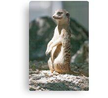 lemur at the zoo Canvas Print