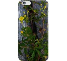 Tormentil, Dun Aengus, Inishmore, Aran Islands iPhone Case/Skin