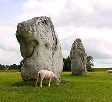 Avebury Stones by hootonles