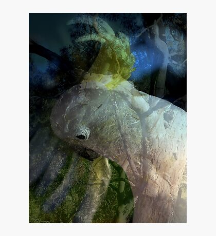Connection by Lorraine McCarthy Photographic Print