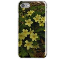 Primrose, Drumlamph Wood, County Derry iPhone Case/Skin