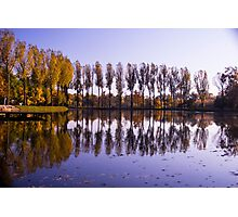 Line of Trees - Nature Photography Photographic Print