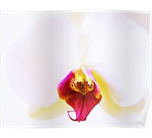 Orchid Blossom II Poster