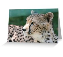 leopard at the zoo Greeting Card