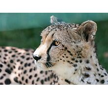 leopard at the zoo Photographic Print