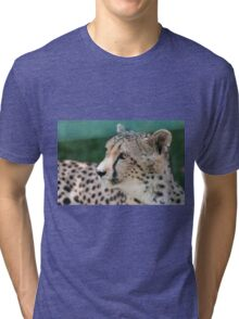leopard at the zoo Tri-blend T-Shirt