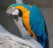 parrot on its perch by spetenfia