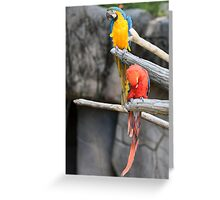 parrot on its perch Greeting Card