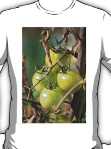 green tomatoes in garden T-Shirt