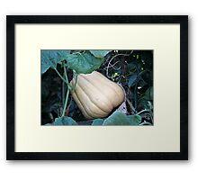 pumpkin in the garden Framed Print