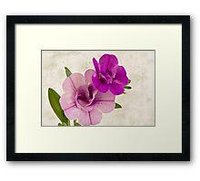 Calibrachoa Petunia Blossoms - Macro Framed Print
