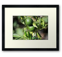chili and orange in the garden Framed Print