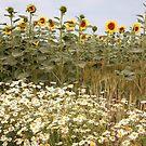 Wheatfield of flowers II by zumi
